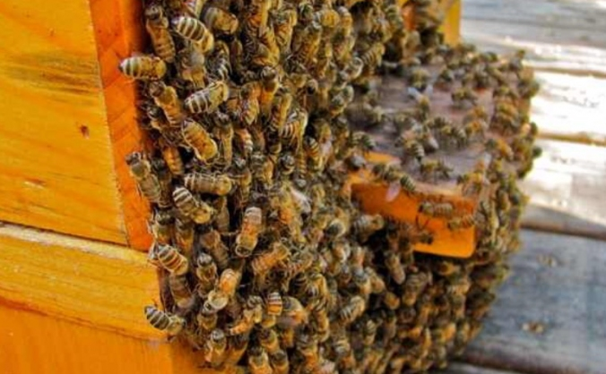 Helping Bees! Fund a new apiary