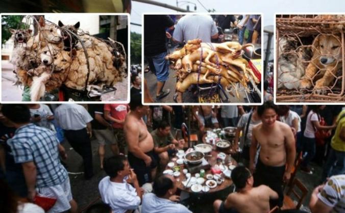 ANIMAL WELFARE IN CHINA