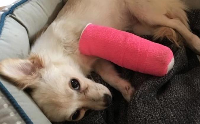 Save Kiki's arm