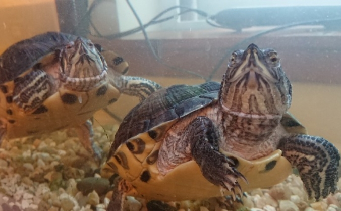 Turtle Tank Upgrade