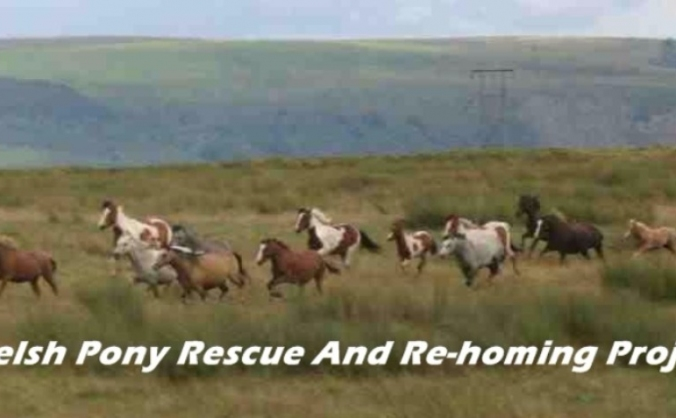 Welsh Ponies Rescue And Re-homing Project.