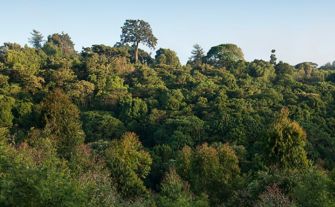 Botanical Internship with Plants for Life Kenya