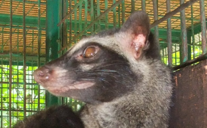 Civet Camera Trap Project