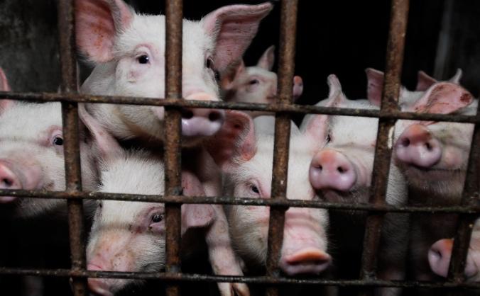 Farms Not Factories - Films