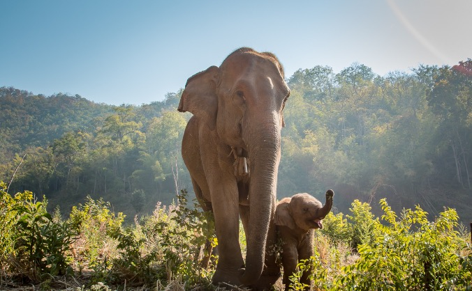 Bring the Elephants Back Home - Save The Grey