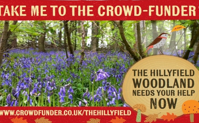 The Hillyfield Appeal, Standing Up for Small Woods