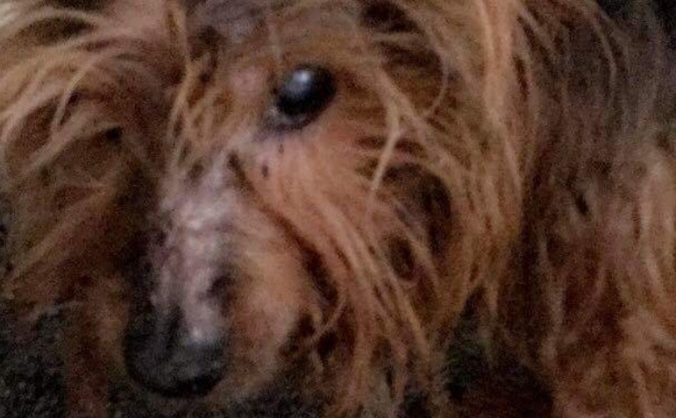 HELP WITH TONY THE TERRIER'S VET FEES
