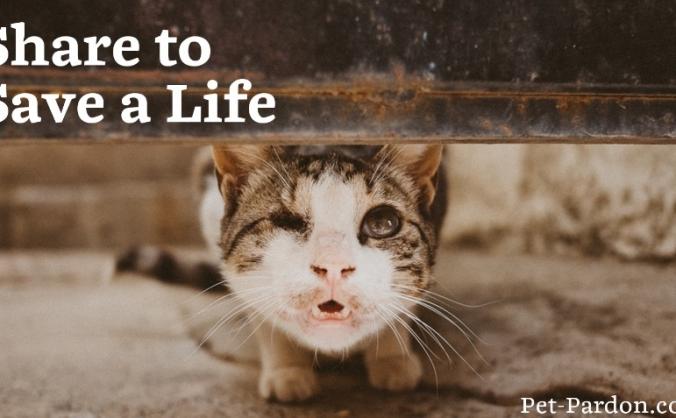 Pet Pardon App