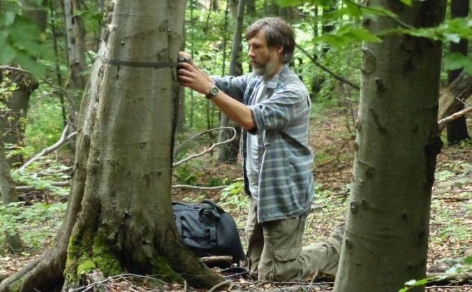 Rare Mammal Survey North Wales