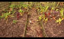 Herts & Essex Community Farm