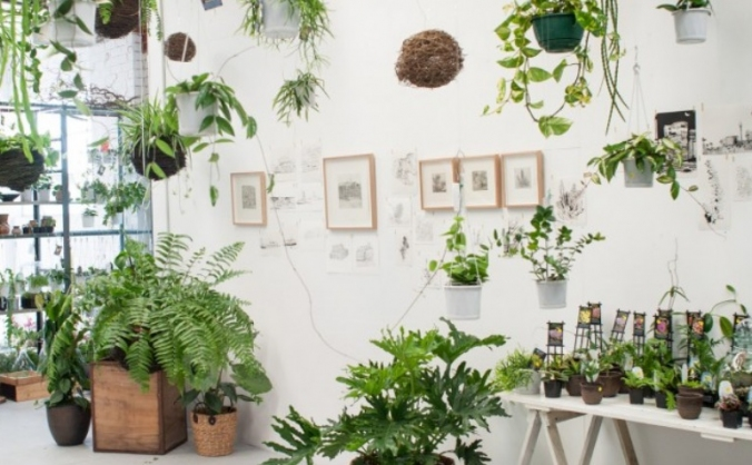 Stephen's Plant Shop