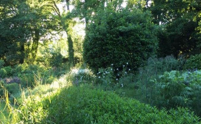 Healing Herb Garden Rejuvination