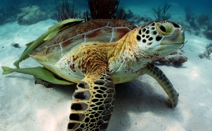Help Save the Sea Turtles in Mexico
