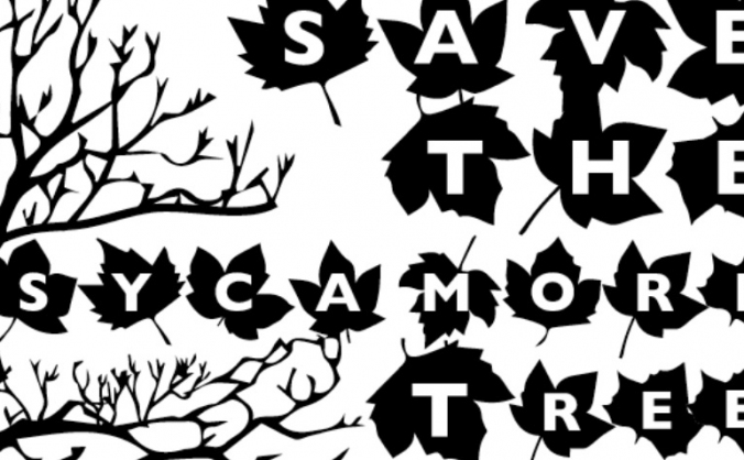 Save Our Sycamore!
