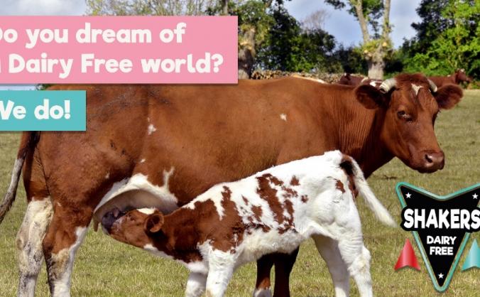 Shakers Dairy Free