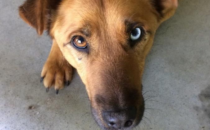 Building a U.K. rescue centre for our Bosnian dogs
