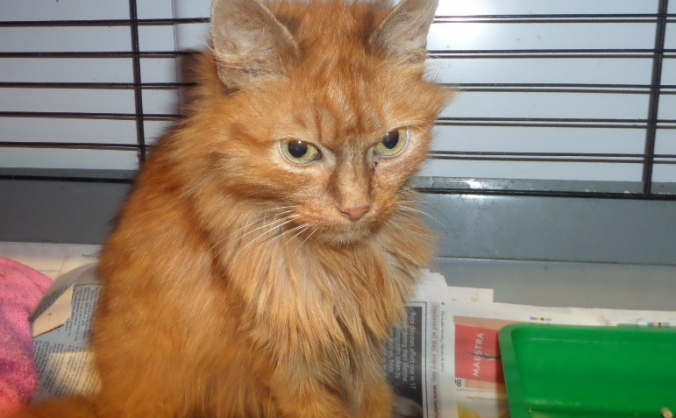 Cats: Help the Brymbo 30