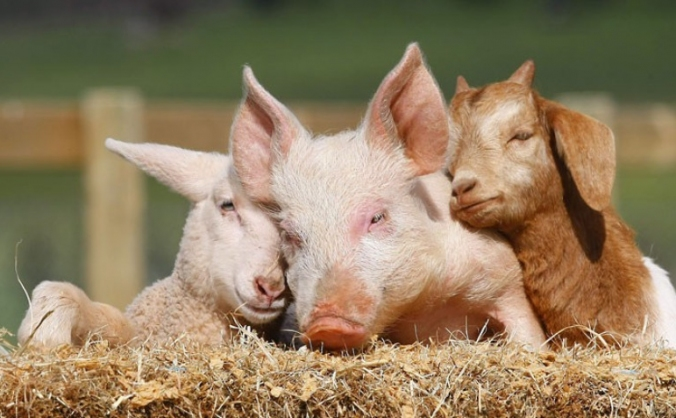 Help Build A Farm Animal Sanctuary - We Need You!
