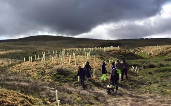 North Pennines Tree Planting Project