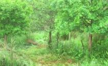 North Devon Permaculture