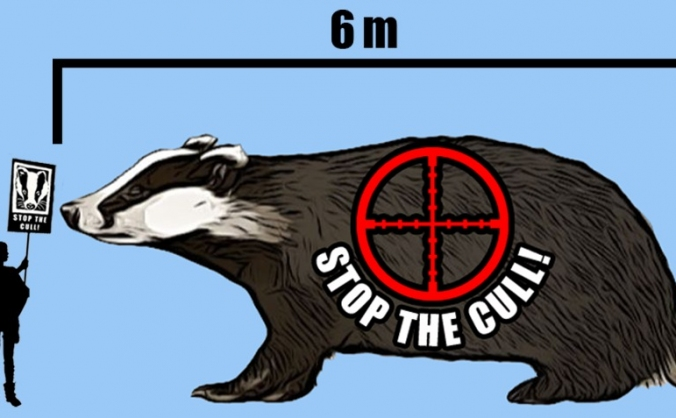 STOP THE CULL BADGER BLIMP