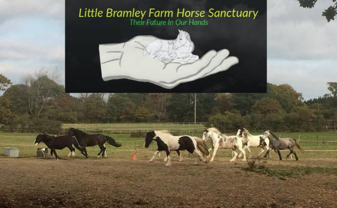 Little Bramley Farm Horse Sanctuary