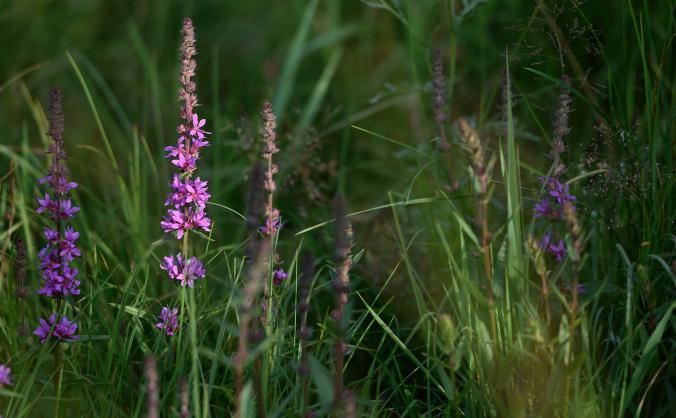 Seeing the meadow/Gweld y ddôl