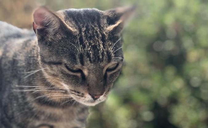 Cats of Iraklia