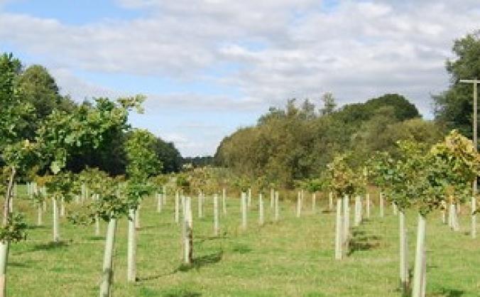 Creating Woodland Campsites