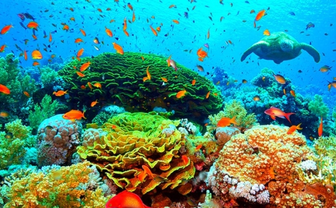 Coral Reef Research Expedition