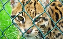 Exotic Pet Refuge Documentary -Student Film