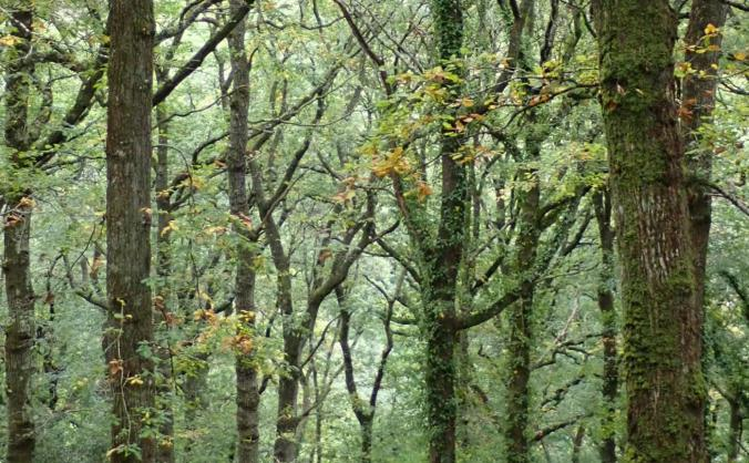 Support UK reforestation projects