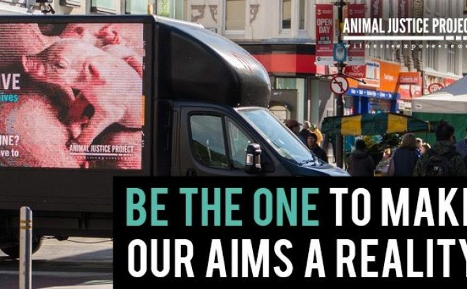 Be a Lifeline for animals this Christmas