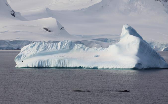 Help Maeva go to Antarctica