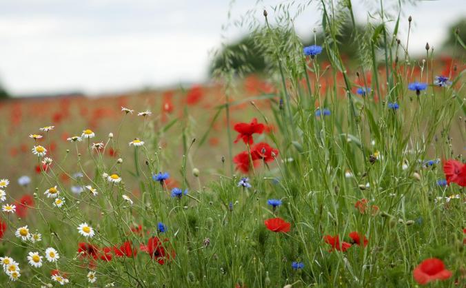 Save Nottinghamshire's Wildflower Meadows