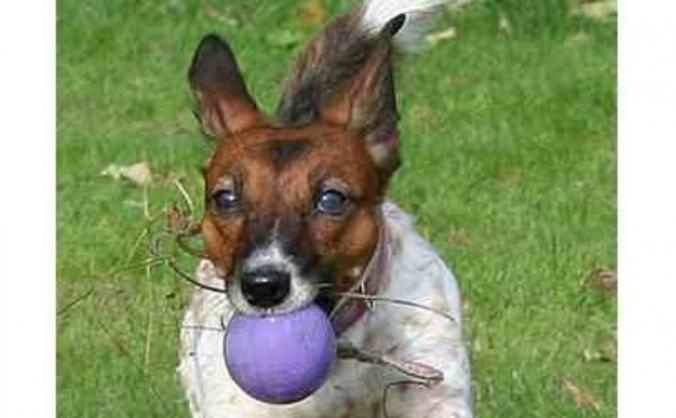 Dottie Dog's vet bill after vicious mauling