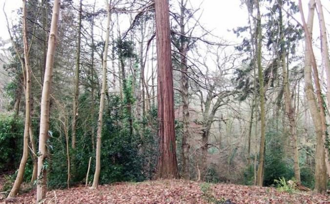 Protect Marlhill Copse
