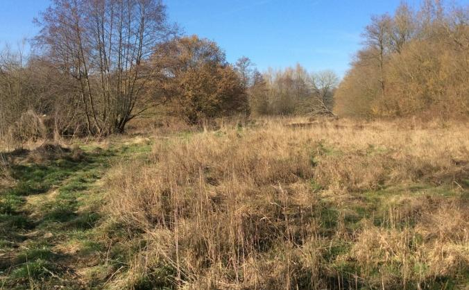 Avon Needs Trees: Starting with the Marden Valley
