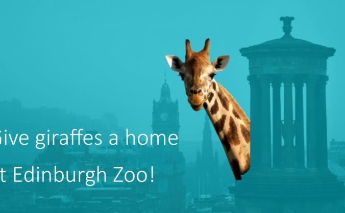 Give Giraffes a Home at Edinburgh Zoo!