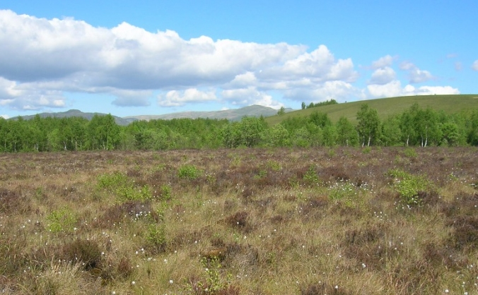 Save Scotland's Peatlands