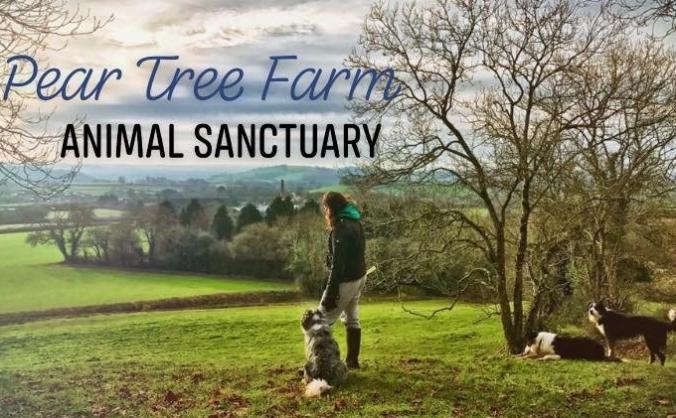 Pear Tree Farm Animal Sanctuary