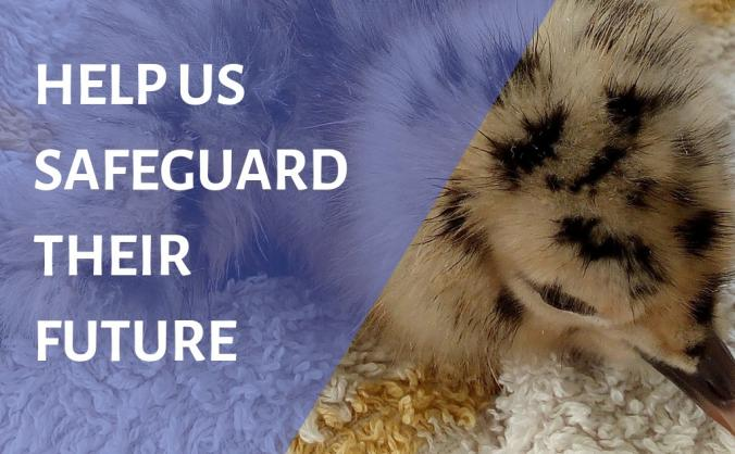 URGENT APPEAL TO HELP BABY GULLS
