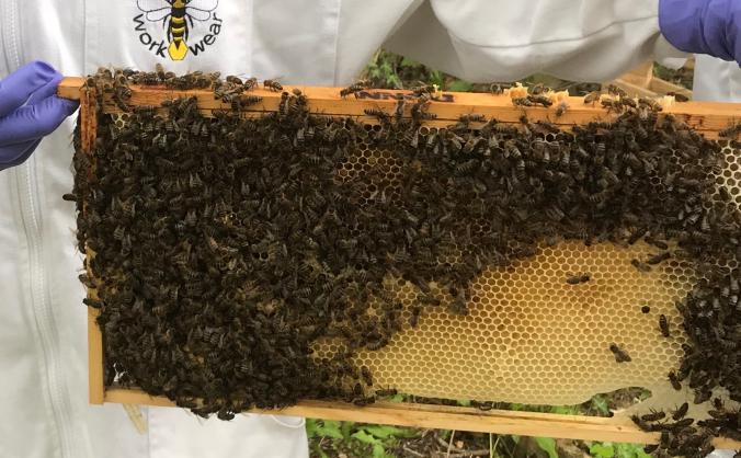 Environmental sustainability through beekeeping