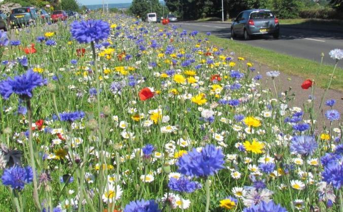 Blooming Wild Devon