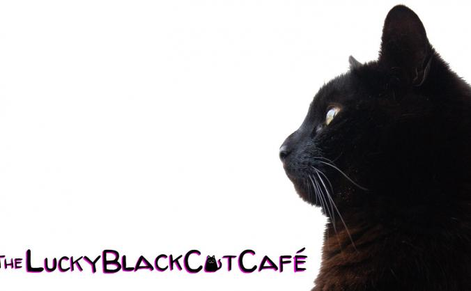 Fund a Cat Cafe/Adoption Centre in Newquay