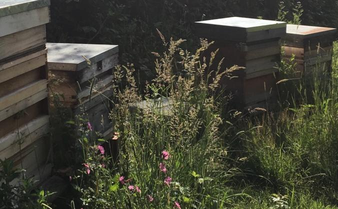 Springhill Honey Bee Collective