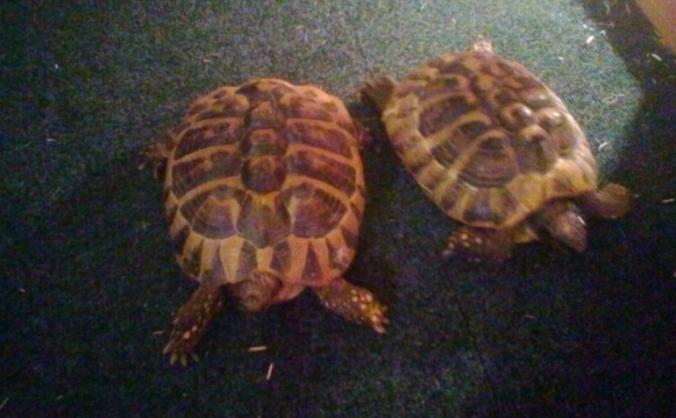 Liverpool Reptile Rescue