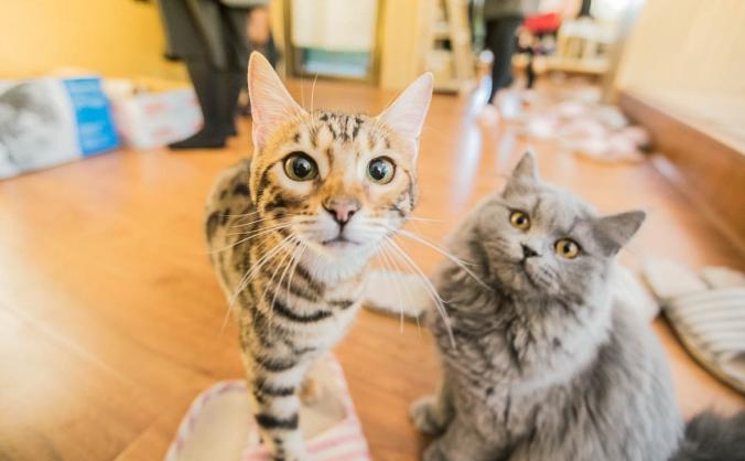 Meowster - a cat cafe for central Londoners