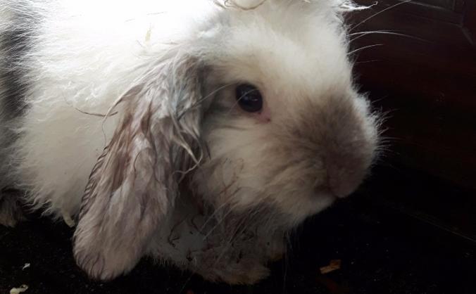 Spay the ratty bunny