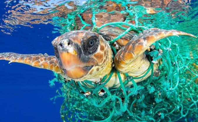 Plastic pollution emergency